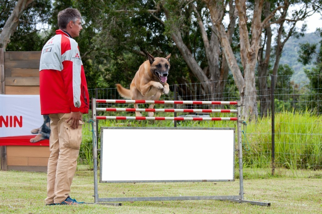 Jean concours canins