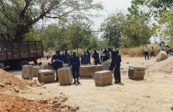 Tchad 12